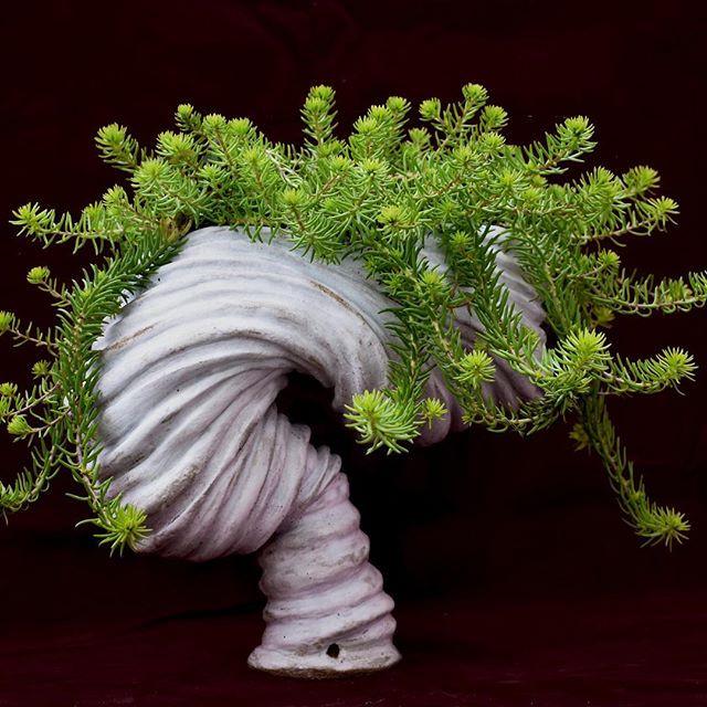 White Planter.