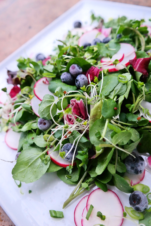 Blueberry & Broccoli Sprout Salad | eatlovegarlic.com @eatlovegarlic
