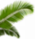 palm-trees-leaves-png-7.png