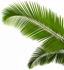 palm-trees-leaves-png-7_edited.png