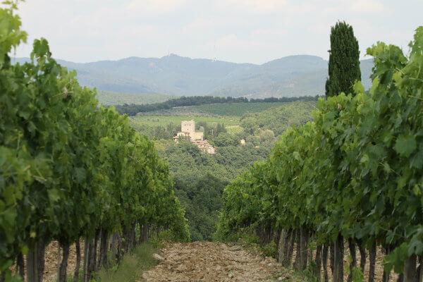 Tuscany region winery