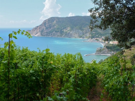 Vineyards overlooking the Ligurian Sea; Liguria region