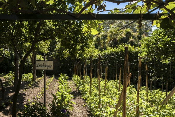 Grand Hotel Cocumella's Organic Garden - Sorrento, Italy