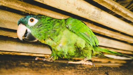 Photos Bolivie (106 sur 126).jpg