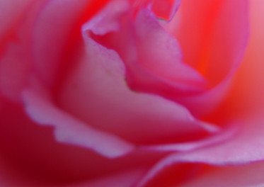 """""""Rosa"""" Fotografie Gemeinschaftsausstellung Ludwig Galerie Schloss Oberhausen, 2019"""