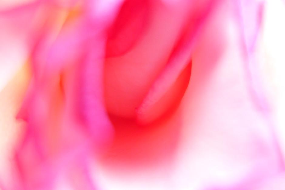 """ohne Titel aus der Reihe """"Rosa"""""""