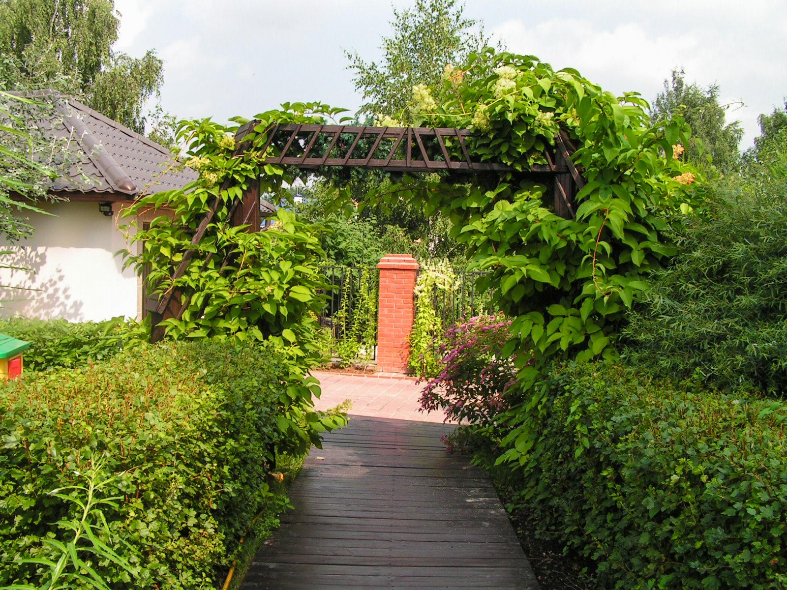 Южный сад в Подмосковье