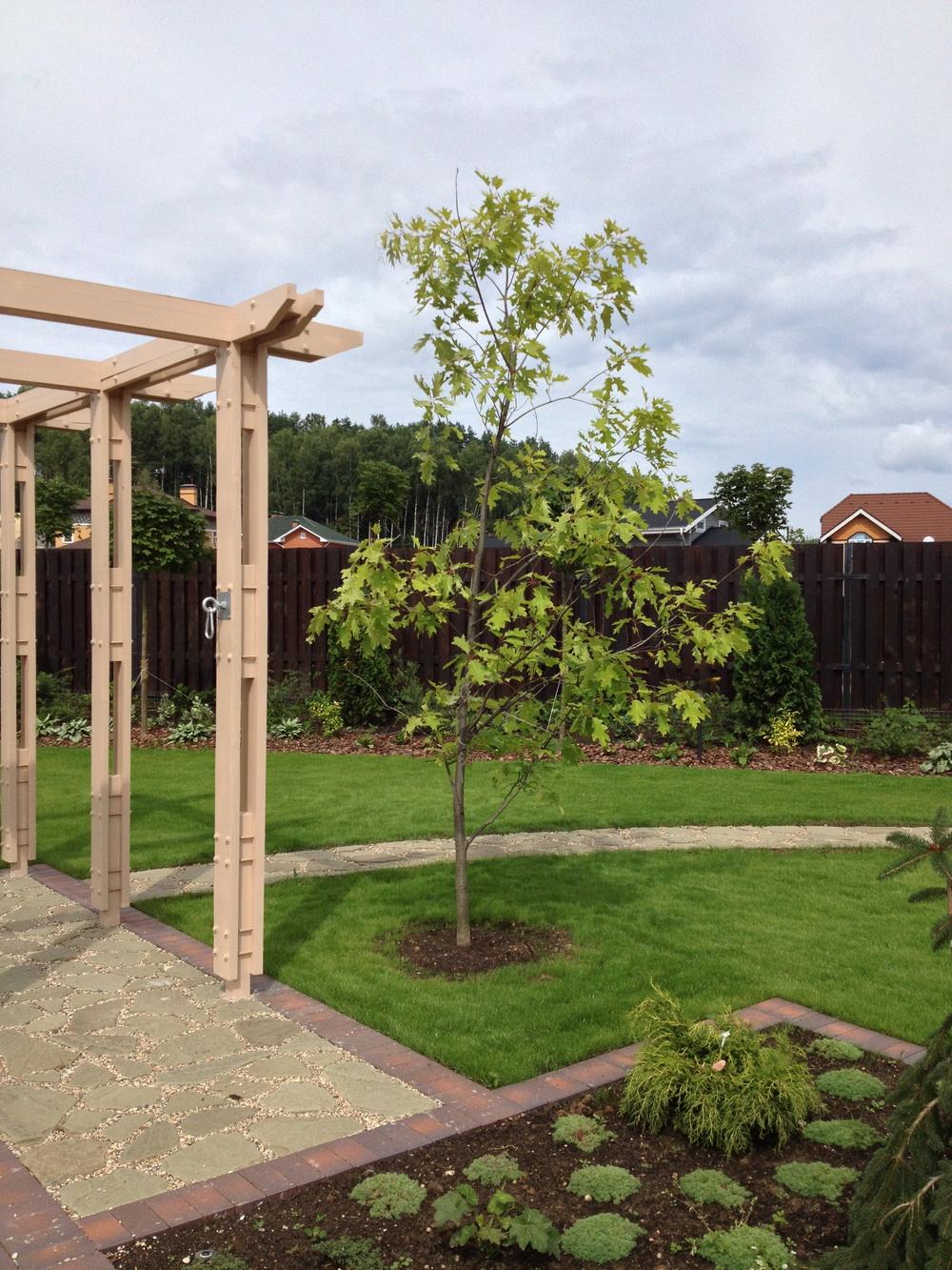 Дизайн сада, Дуб красный, Зона отдыха