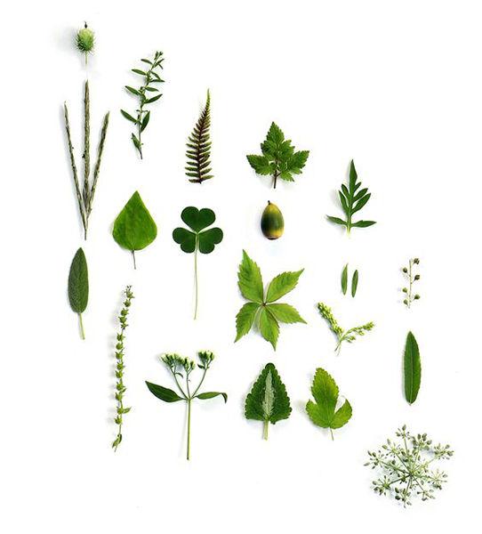 Озеленение, Хвойные группы, Газон, Ландшафтный дизайн, Многолетники, Лекарственный сад