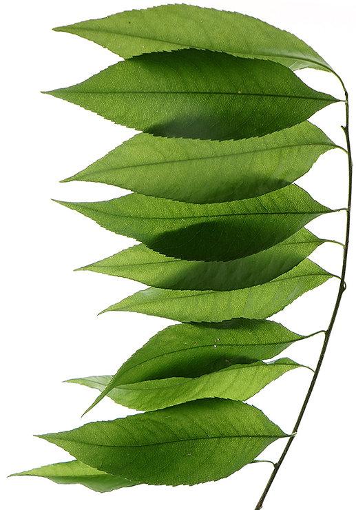 Озеленение, Расстения, Ландшафтный дизайн, Дизайн сада, вечнозеленые, Декоративные растения, Газон