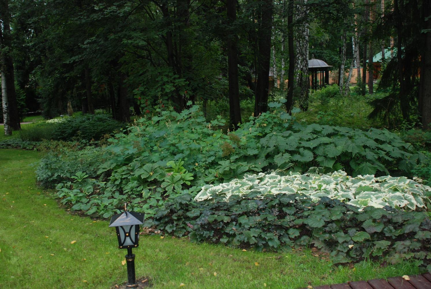 Теневой цветник, Лекарственный сад, Озеленение