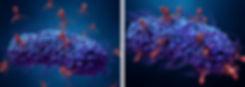 RHP-Bacteriophages.jpg