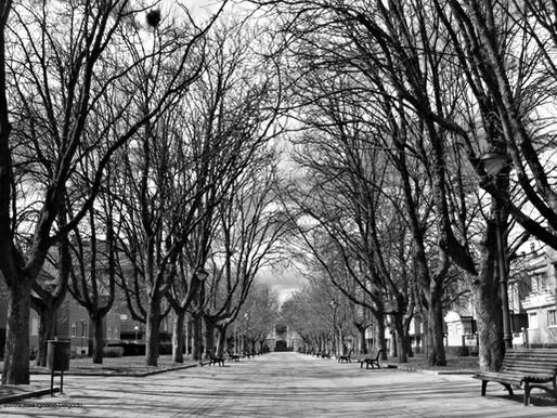 Árboles de ciudad