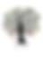 logo Cascanueces