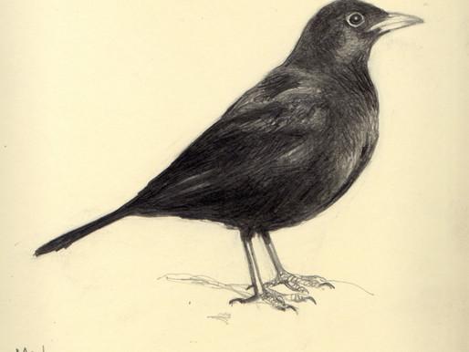 Conocer pájaros