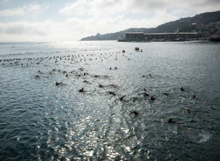 Young and old out in force for ocean swim in Wellington Harbour