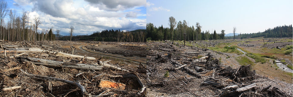 Combined Images of Hazeltine Creek.jpg
