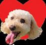 DOG CHARITY SYMBOL.png