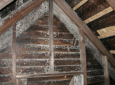 Black-Mold-in-Attic.jpg
