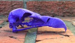 Replica small vulture skull