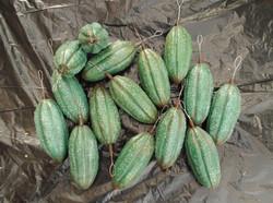 Green coco pods