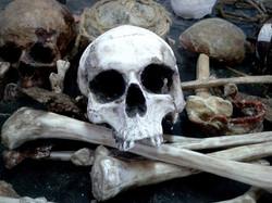 Sceleton and bones
