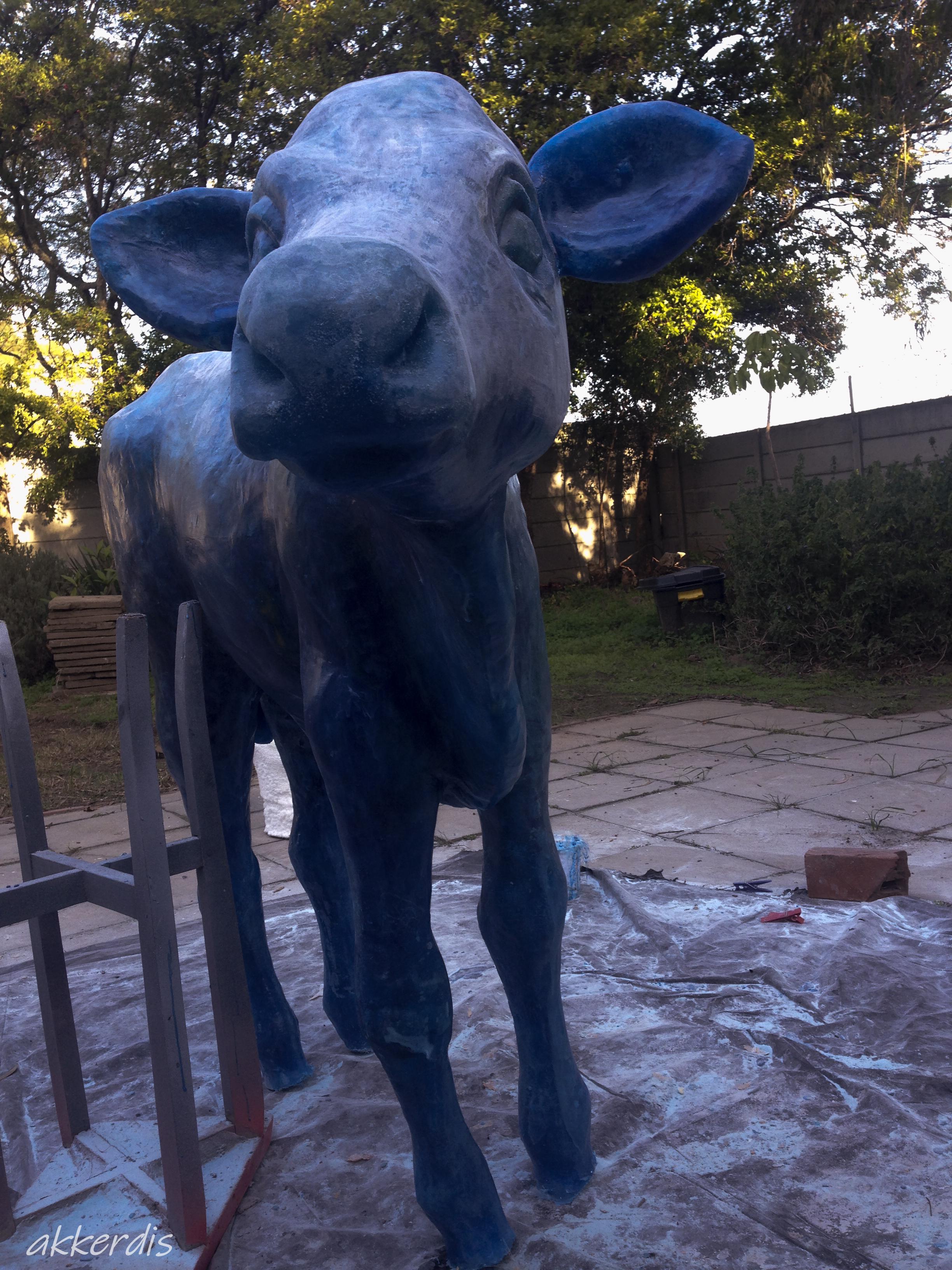 calf in progress