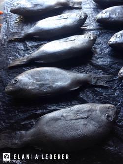 Fabricated fish