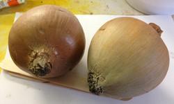 Fabricated onion