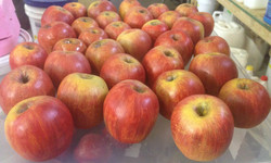 Fabricated red apples