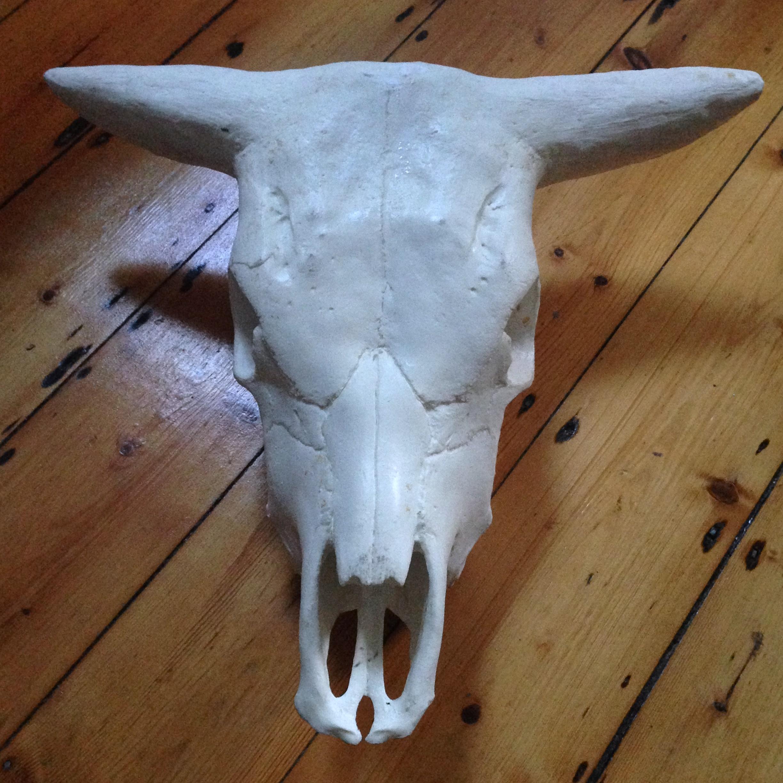 Replica cow skull