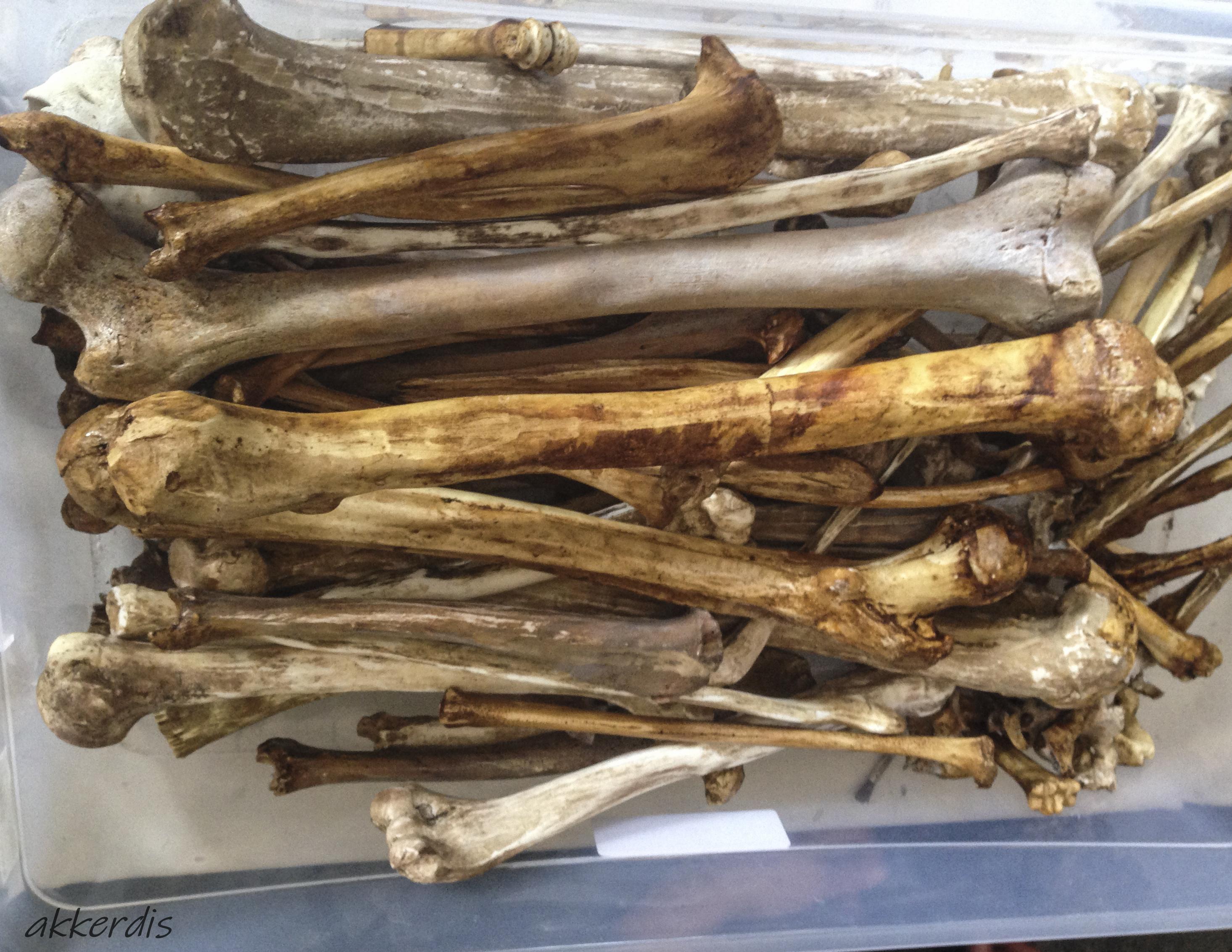 fabricated bones