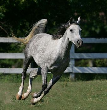 myfirsthorse.jpg