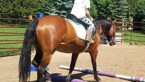 The Right Horse: Riding Instructors as Stakeholders