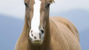 2018 Certified Horsemanship Association's The Instructor Magazine