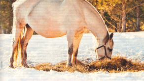 Agents of Abortion: Why Mares Abort