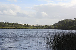 Yeagaup Lake with Yeagarup Dunes in background