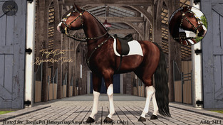 Cheval D'or - Spanish Tack