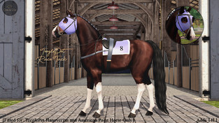 Cheval D'or - Race Tack
