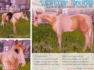 """Sugar Cookie"" the American Paint Horse"