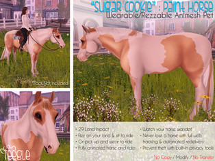 """""""Sugar Cookie"""" the American Paint Horse"""