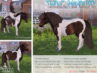 """""""Peanut"""" the Shetland Pony"""