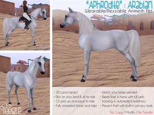 """Aphrodite"" the Arabian"