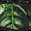 Thumbnail: Floral Mask
