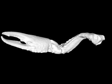 Early 3D Scanning Results