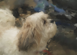 Small dog looking up, painting