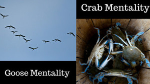Surround Yourself With Geese, Not Crabs