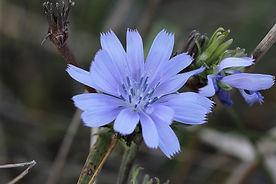 Fleurs de Bach Naturopathie Angers