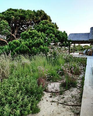 PlantingDesign_Melides e Algarve.jpg