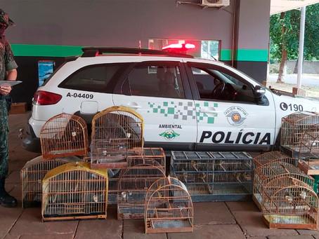 Polícia Ambiental apreende 32 aves mantidas em cativeiro de forma irregular